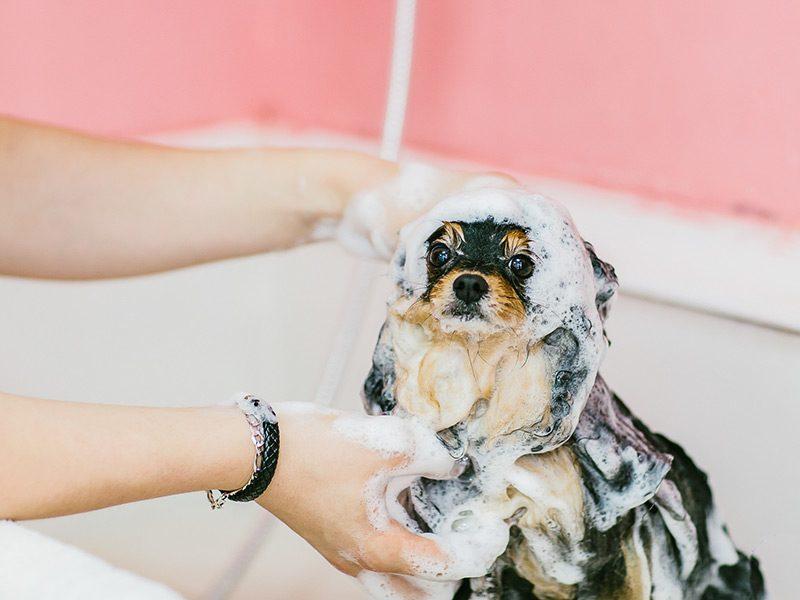 dog-puppy_t20_EO9GWK.jpg